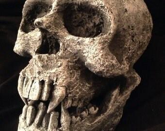 Handmade Vampire Skull / Vampire Art / life-size skull