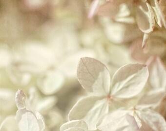 Hydrangea Floral Photography Nursery Decor Botanical Print White Pastel Pink Bokeh Soft Hazy Photography, 8 x 8 Fine Art Print