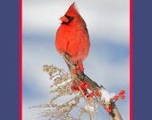 Northern cardinal in winter bird photograph- 8x10 matted