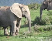 Baby elephant photo, mom and baby, baby animal photography, elephants, nursery room art, african theme art, nomadah photography