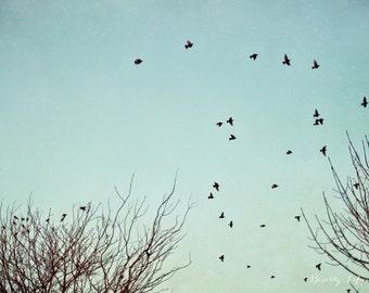 nature, flying birds, blue sky, fine art photography