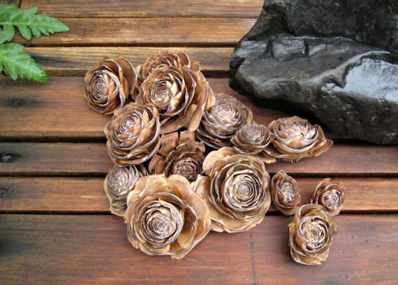 Cedar Pine Cones Cedar Rose Cones Pine Rose