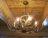 Deer Antler Chandelier, 6 lights, Best Quality on the web,our fall and winter special, better take a look