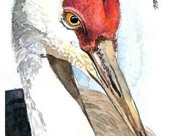 ACEO Limited Edition  - Close up Sandhill Crane
