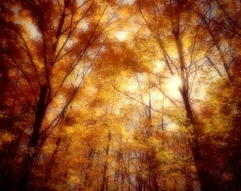 Autumn Photography, Autumn Forest, Autumn Trees, Sunlit Forest, Fall Oak and Maple Trees, Sunny Rustic Nature Tree Print