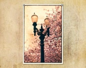 Portland Oregon Lamp Post and Springtime Cherry Blossoms Pink--Fine Art Lomography 8x12