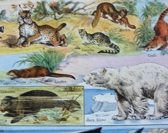 Vintage French DICTIONARY ILLUSTRATION, A4, 2 sided, Animals 2, Mamals. Larousse universel. Animal Print.