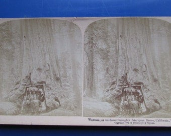 Antique Stereograph Stereoscopic Card Wawona, as we drove through Mariposa Grove, California