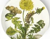 dandelion 1600's botanical melamine plate