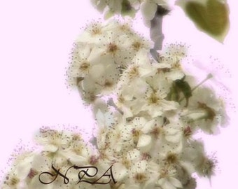 Soft Dreamy Spring Flowers Pink White Red Matted Picture Art Print A414