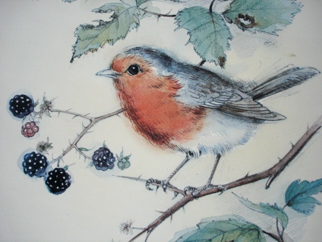 Vintage Bird Print Robin Redbreast Print Watercolour And