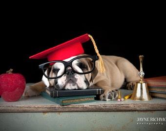 Dog Graduation Cap / Graduation Hat Costume