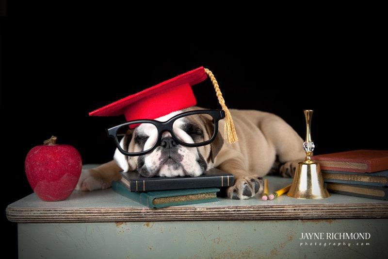 Dog Graduation Costume - Meningrey