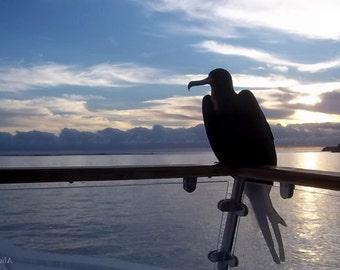 Galapagos Birds Wallpaper/Screen Saver