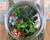 Candy Jar Canister Green Plant and Moss Terrarium - A Perfect Birthday or Housewarming Gift
