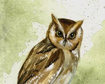 Eastern screech owl (Otus asio) watercolor giclee print