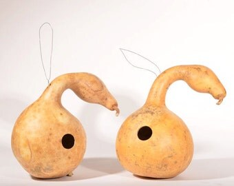 Goose gourds, swan gourds, two (2) natural gourds, ready to paint, drilled for birdhouses