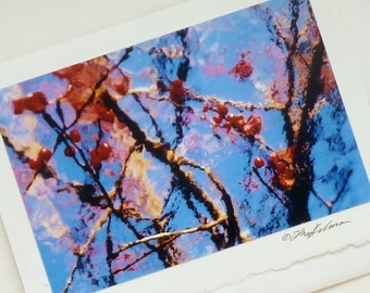 photo card bright bittersweet branches