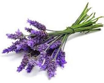 1oz Natural Lavender Essential Oil, Lavender Fragrance Oil, Lavender Scent, Lotions and Potions
