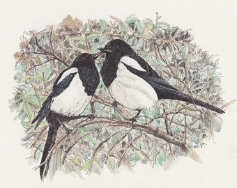 Two for Joy - A4 Archival Print of two Magpies