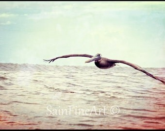 "Ocean Glider - Surf Art - Retro - Pelican - Bird Art - Fine Art Photography  7""X10"" - Vintage - Home Decor"