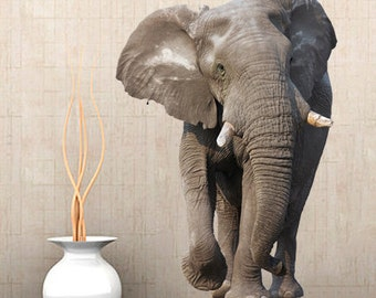 WSD166 - Large african elephant photo wall sticker. animal photo realistic wall decal