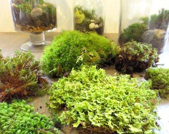 Gimme Some Green....Moss Terrarium Contents DIY Terrarium Supply Live Moss Supply Layered Terrarium Supplies Live Moss Kit