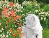 Beautiful canvas, unframed and signed print of the West Highland White Terrier, Sir Hamish McTavish 1A