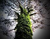 Ireland Landscape Photography Mammoth Ivy Tree Green Shankill Home Decor Print