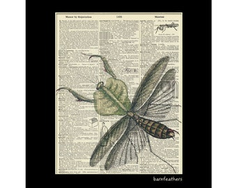 Vintage Dictionary Art Print - Preying Mantis - Dictionary Page - Book Art Print - Vintage Illustration No. P66