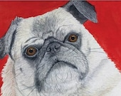 Red Portrait of Pug Postcard by Liz Marshall of 101dogportraits