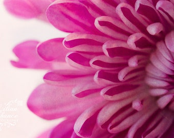 Magenta Petals  Fine Art Macro Photography Print, Flower Photography, Purple Flower Photo, Nature Photography