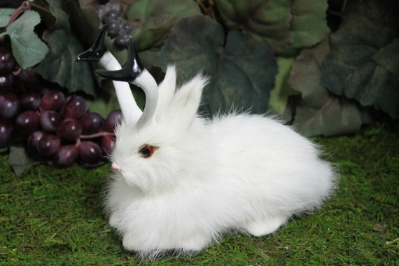 White Snowy Jackalope Rabbit With Horns Lying Easter Bunny