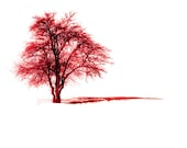 Red tree, Nature photography, Alone tree, fine art photography, valentines day, wall art, colour,  8''x8''inch.