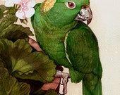 Green Amazon Parrot Note Cards