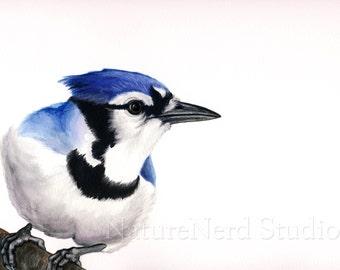 """Blue Jay """"Portrait of a Tattle-Tale"""" - Watercolor, 8"""" x 10"""" Fine Art Print"""