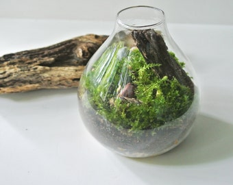 Meadows & Stone  Moss Terrarium - Moss , Living Home Decor, Plant, Gift, Pebbles, River Rocks, Green, Wood, Glass Vase, Woodland