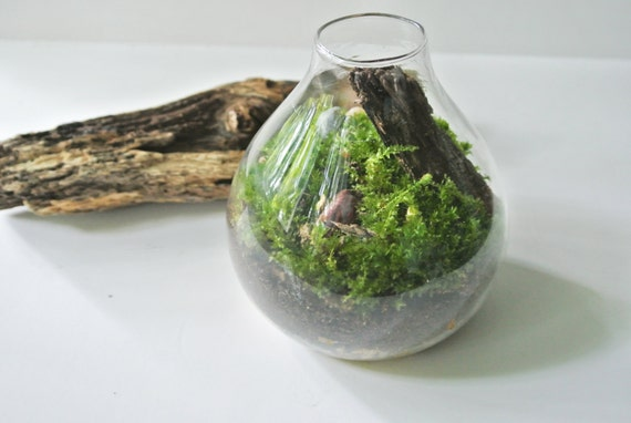 TOP SELLER Meadows & Stone  Moss Terrarium  - Moss , Living Home Decor , Plant, Gift  , Pebbles, River Rocks, Green, Wood, Glass Vase