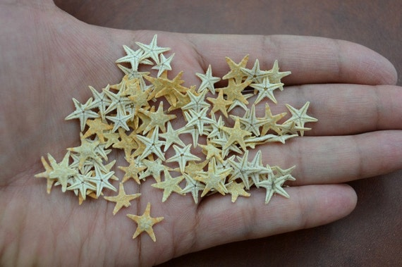 90 pcs small starfish star sea shell beach craft 1 4 for Tiny shells for crafts