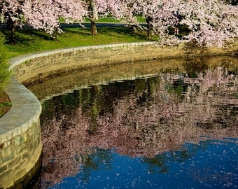 Cherry Blossom Reflection. Photo of cherry blossoms reflecting into the Tidal Basin near the National Mall in Washington, DC. Gallery canvas