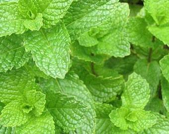 Organic mentha spirata seeds,non gmo seeds,418,herloom seeds, δυοσμος,gardening,diosmos,greek herb, keftedaki herb
