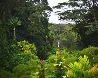 8x10 metallic print - Akaka Falls Rainforest Hawaii
