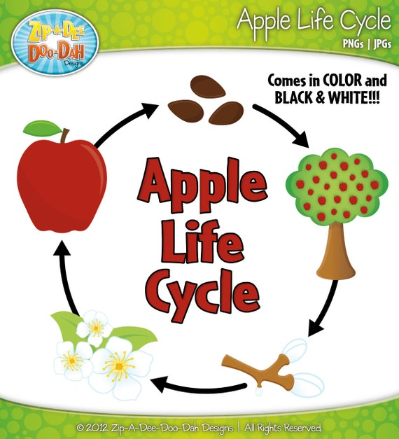 Items similar to Apple Life Cycle Clipart Set - Includes 18 Graphics ...