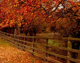 Autumn leaves Photograph, England Landscape, Print Wall Art, Red and Orange Leaves, Season, Tree and Nature Photography