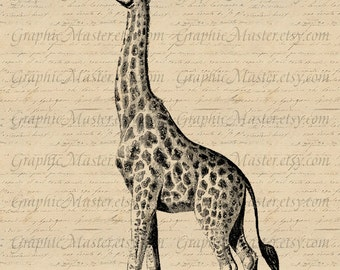 Giraffe PNG JPEG Wildlife Digital Collage Sheet Instant Download Image Iron On Transfer Prints Burlap Fabric Tote Pillows Tea Towels An172