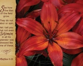 16x20 Canvas Art Gorgeous Red Lilies Inspirational Design, Matthew 6:28, flowers, bible verse, scripture