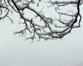 Photo: Snowy branches with bluff