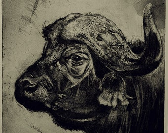 Cape Buffalo etching