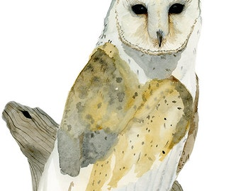 Watercolor Painting Bird Art Barn Owl Archival Print 5x7