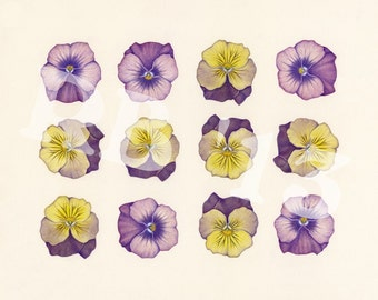 "Pansy Duo on Repeat  14""x11"" Limited Edition Giclee Print (5/50)"